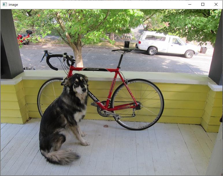 犬と自転車 画面表示 OpenCV