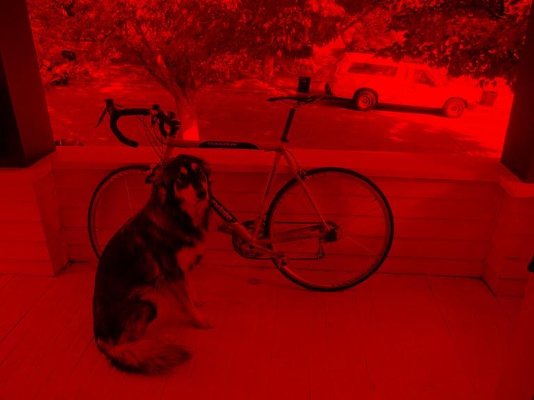 犬と自転車、画像出力